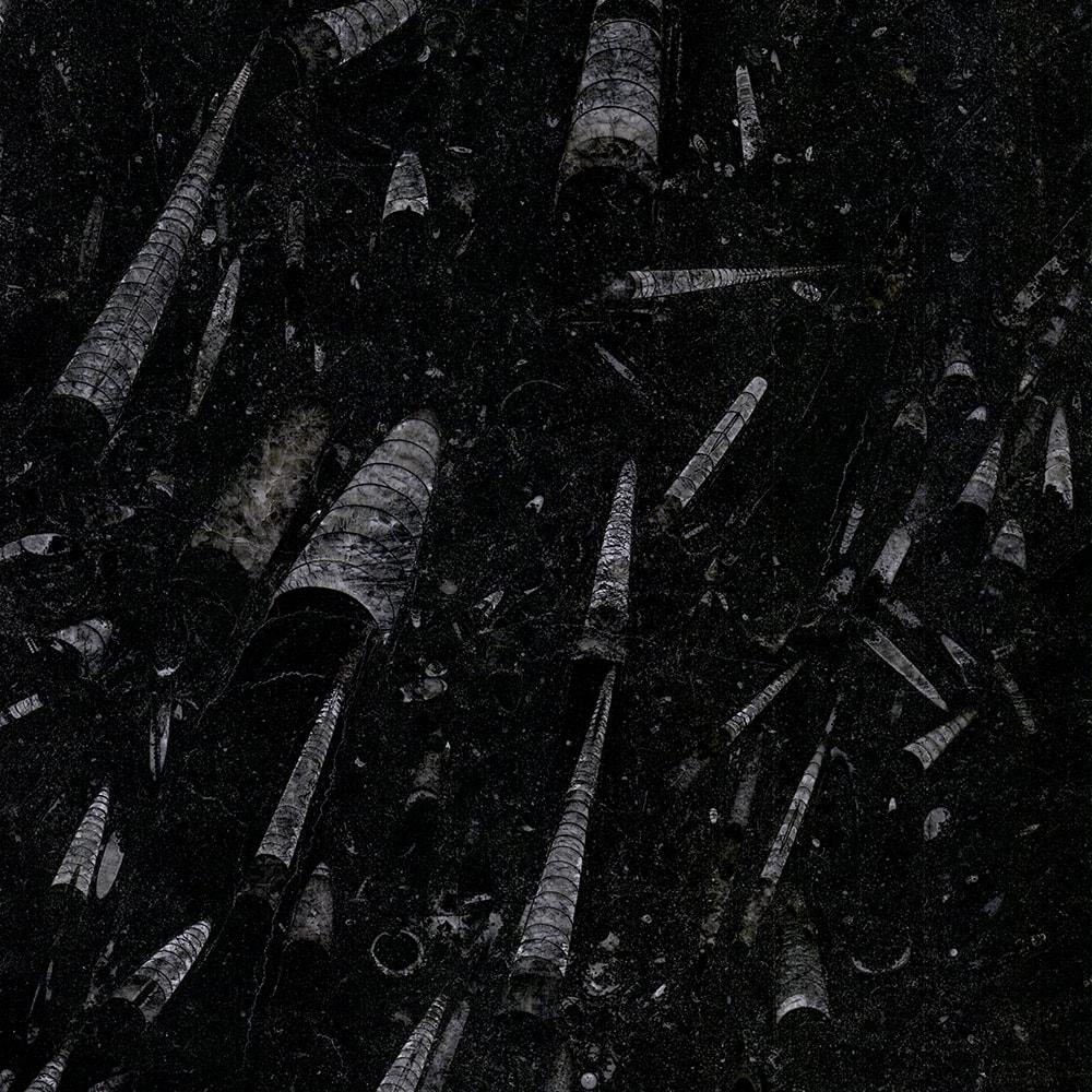 Nero Fossil